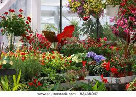 garden-flowers (1)